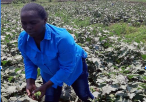 Fortunee Umimana, IEEW 2021 PEACE THROUGH BUSINESS(r) applicant, inspects the fields in Rwanda.